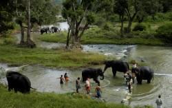 Muthumalai Elephant Camp