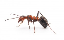 How to Kill An Ant????