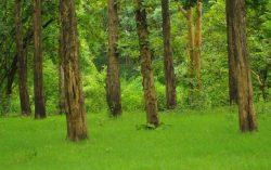 Views from Muthanga, Wayanad