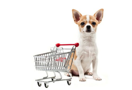 dog to shop