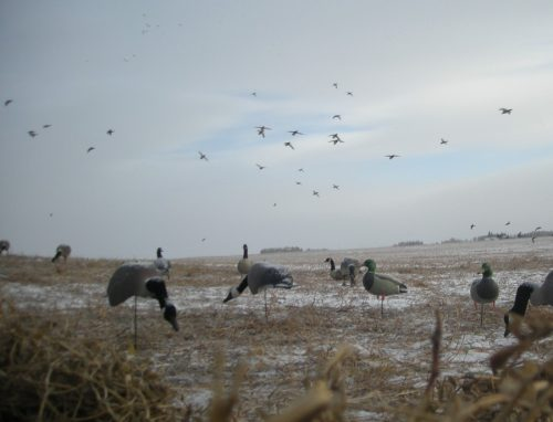 Hunting In  Canada