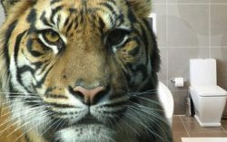 Kaizen Story: Tiger in the Toilet