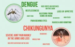 Death Caused by Dengue and Chikungunya in India