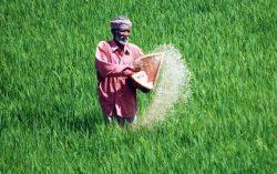 Govt planning for Direct Transfer of Fertilizer Subsidy