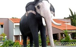 Guruvaayoor Keshavan: The Majestic Elephant