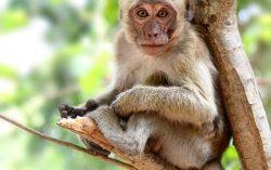 A monkey is sitting in a tree