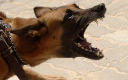 Dog Bite Law in Rhode Island versus Massachusetts Legal Analysis | d'Oliveira & Associates