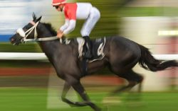 Horse Betting Tactics Explained? How to Make Most of Your Bets